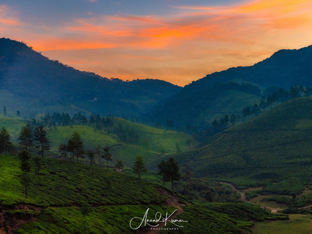 Munnar- one of the most picturesque destinations in the South India.