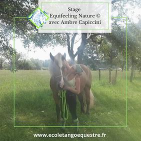 equifeeling nature ecole tango equestre.