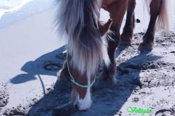 cheval les pieds dans le sable