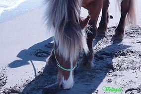 cheval les pieds dans le sable- Ambre ca