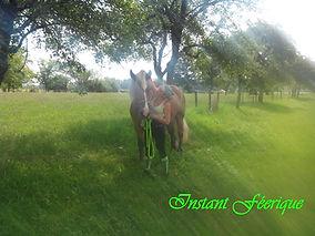 sensibilité equestre ambre capiccini
