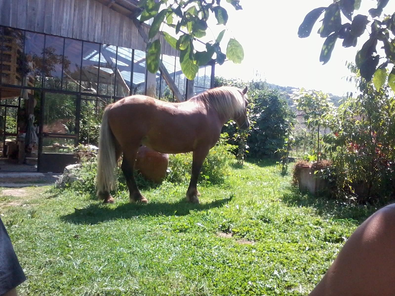 Verrière et cheval Ambre Capiccini