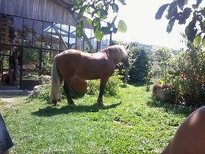 Jardin equestre ambre capiccini.jpg