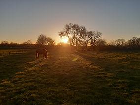 Soleil couchant sur le jardin équestre -