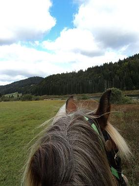 ecoute du cheval ambre capiccini.JPG