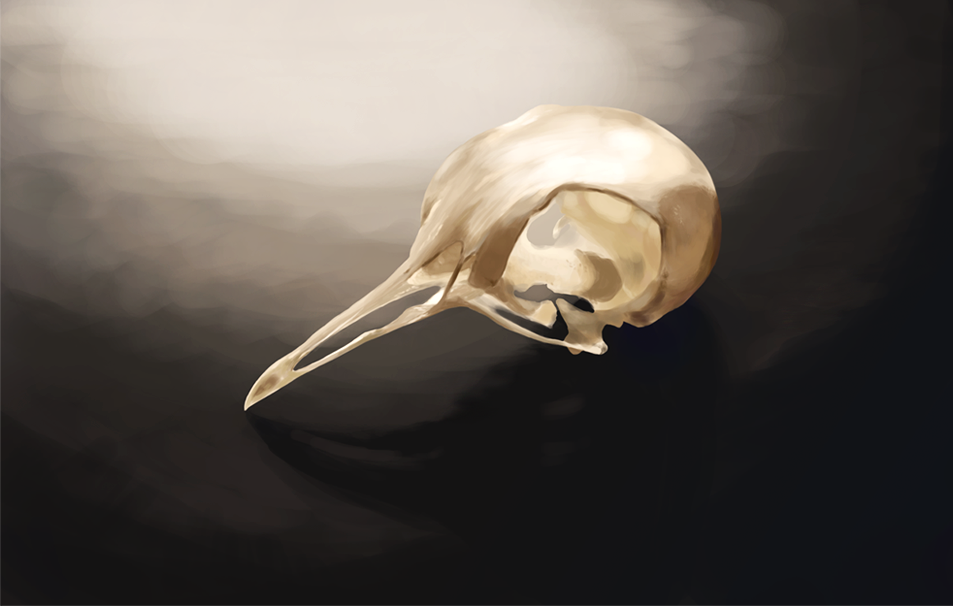 Dove Skull Digital Painting