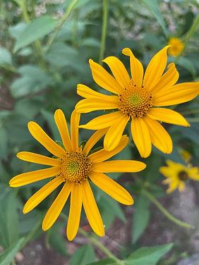 Flower Yellow.jpg