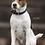 Thumbnail: Collier chien tressé