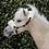 Thumbnail: Licol Cuir /Mouton Pony