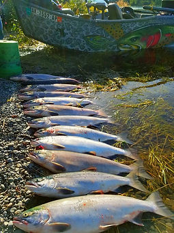 Sockeye Salmon guided fishing on the Kenai River in Alaska with Kenai River Cowboys boat in the background