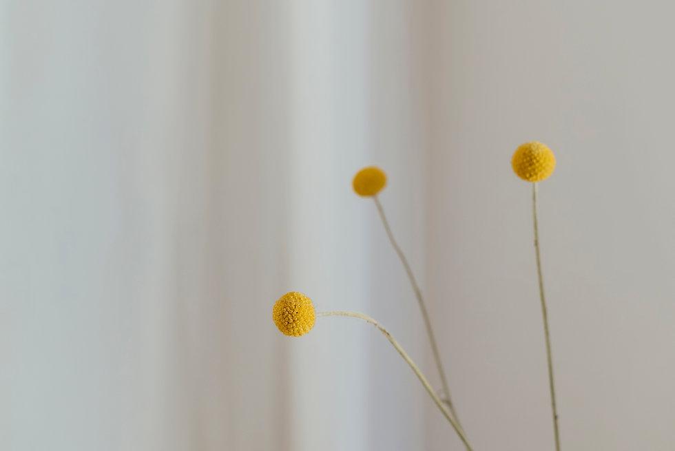 Bild Blumen Startseite