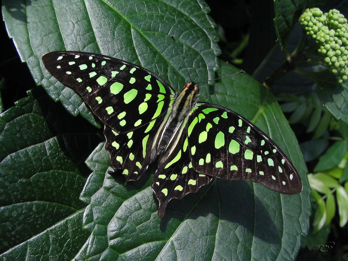 papillons 0789