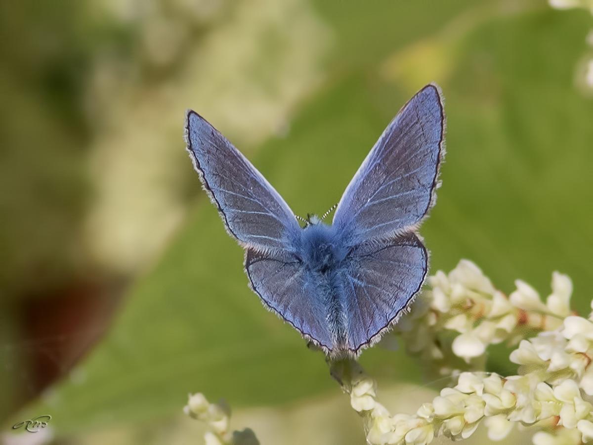 bleu porte-queue-1I5A5917