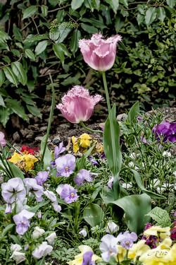 fleurs 2456