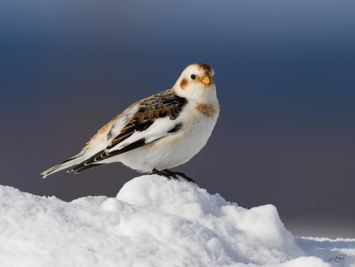 lectrophane des neiges 3028
