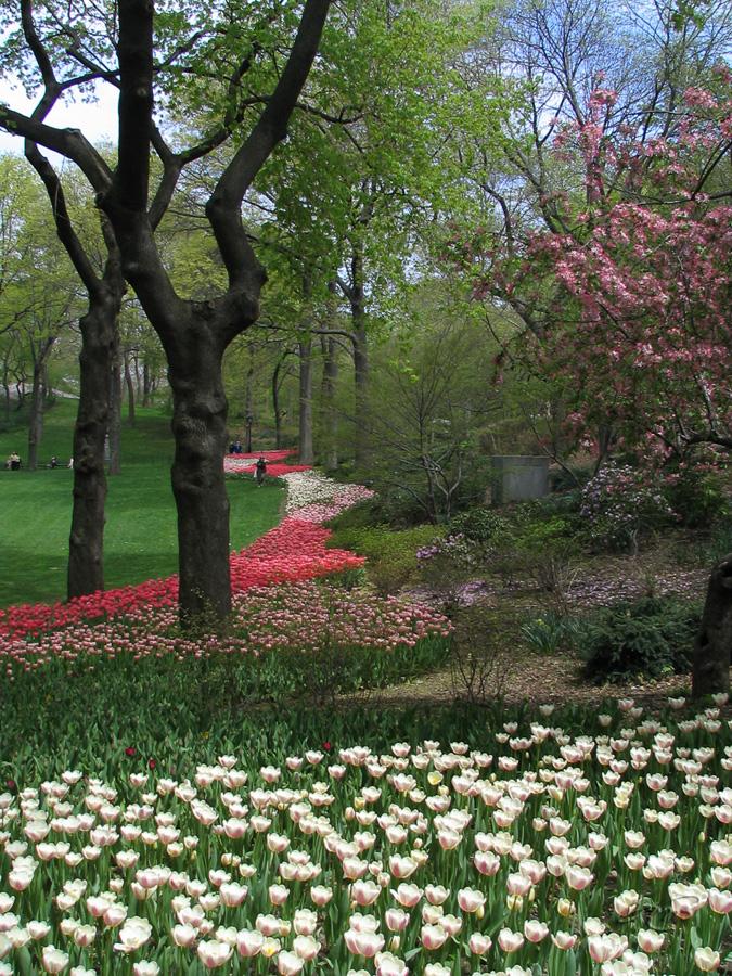 Central park 2262