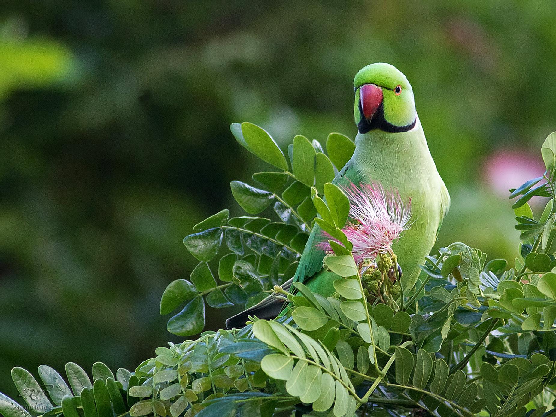 Photos | Oiseaux | Hawai