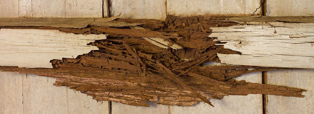 Dry Rot Divine Home Remodeling