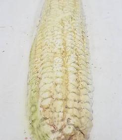 Corn 3.jpg