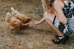 Wedding guest feeding chickens