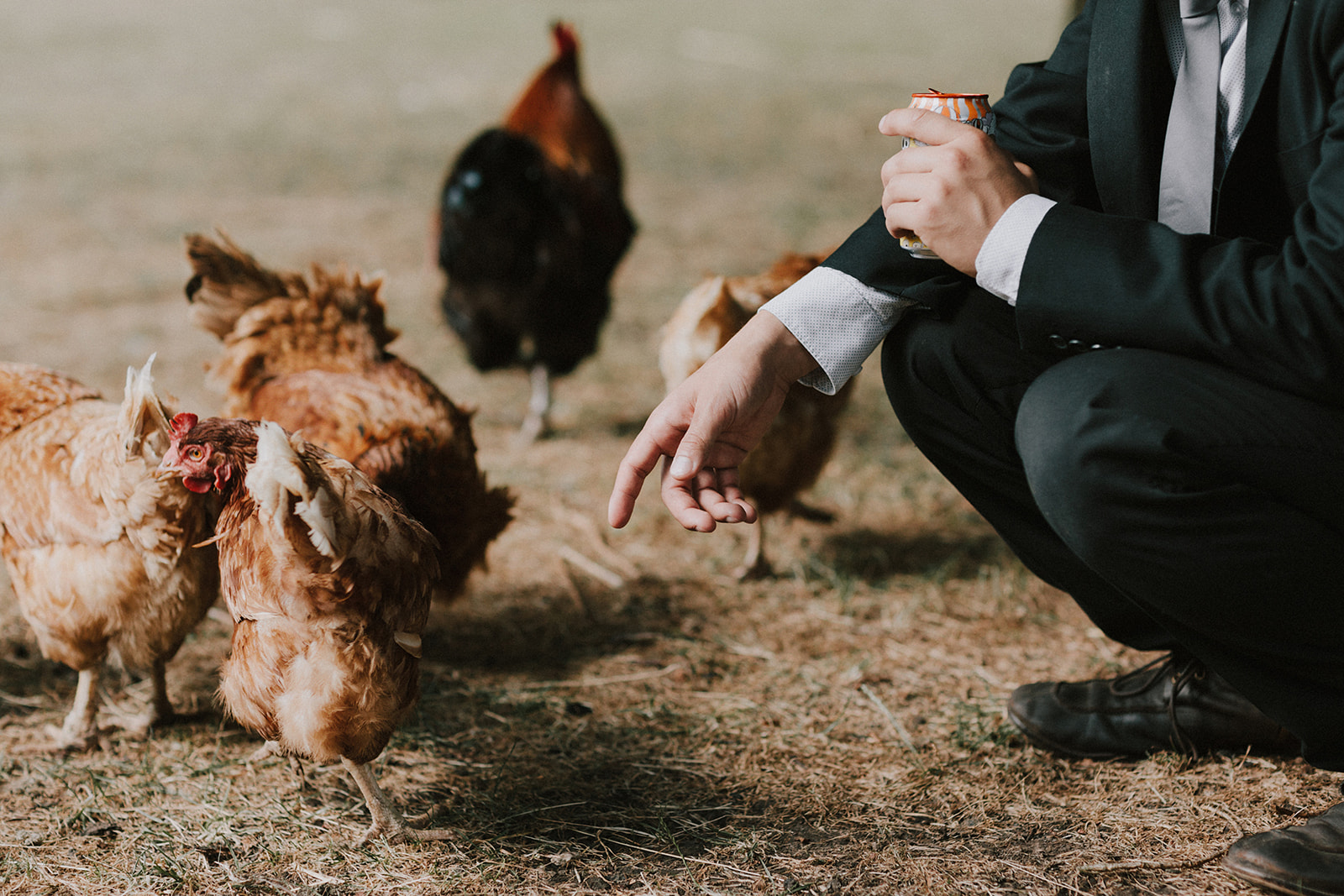 Chickens at wedding