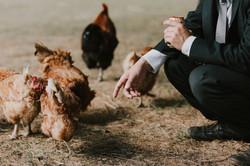 Chickens at wedding