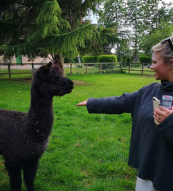 Hen feeding an Alpaca
