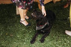 Family pet at wedding
