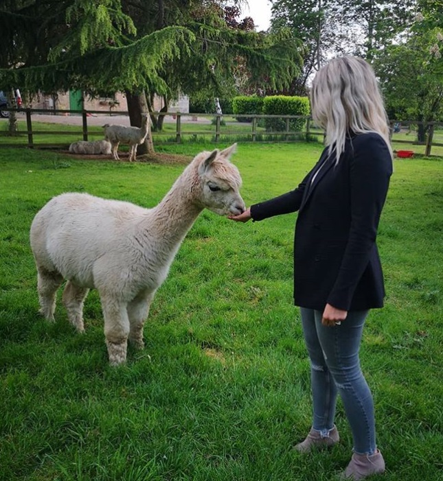 Feeding the Alpaca