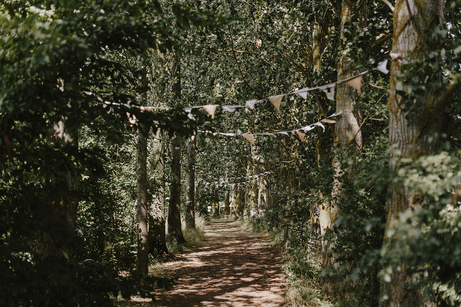Tree lined wedding walkway