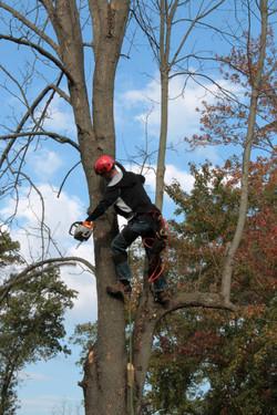 Baumpflege und Baumfällungen