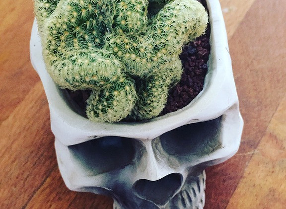 Skull plant-pot with cute cactus that looks a bit like a brain