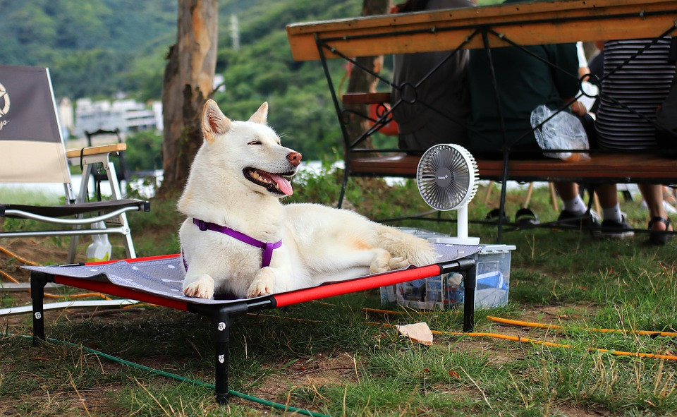 A dog enjoying the summer, probably having been to some great MAP events first