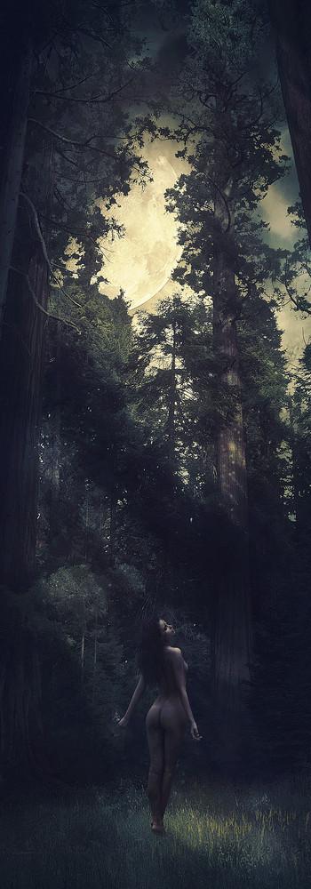 Sequoia-12 copy.jpg