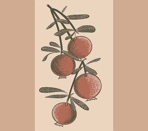 Pomegranate Stripe