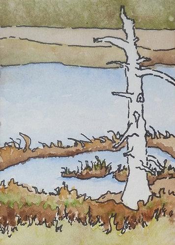 "Marsh Tree 3""x2"" watercolour on card"