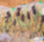 Mesh instr. image for website Vaillancou