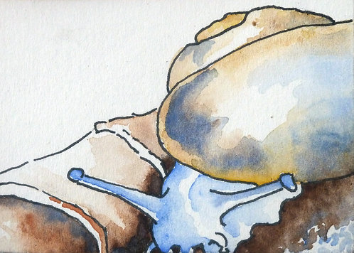 """Snail 3""""x2 """"  watercolour on card-framed"""