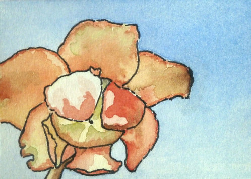 """Pitcher Plant 3""""x2"""" watercolour on card"""