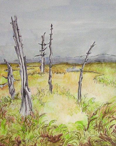 "Saltwater Marsh Study 17""x11"" Ink, Graphite, Watercolour on paper.jpg"
