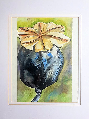 Poppy Pod #1  11x14 inches , Water colour, framed