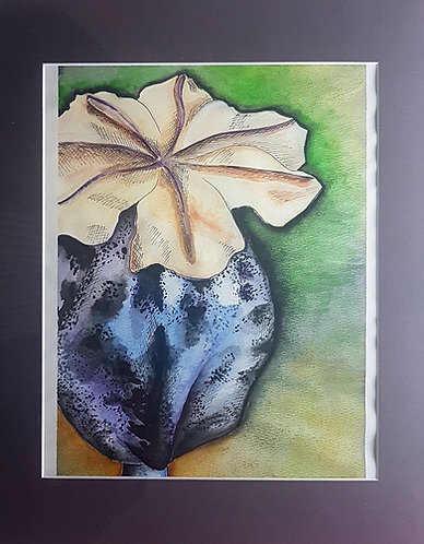 Poppy Pod #2 11x14 inches , Water colour, framed