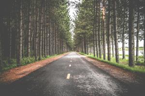 De weg naar Martine Schrijft