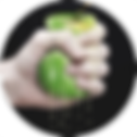 wylsa logo.png
