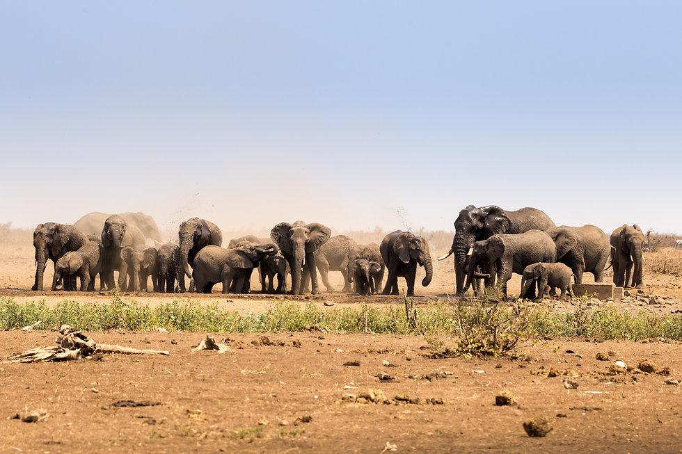 Deborah Knighton Travel specializes in planning trips to Africa