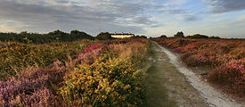 dunwich heath.jpg