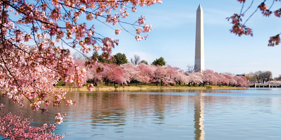 Spring Cherry Blossom Reception