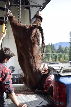 Receiving Beef