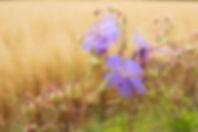 Bloemen_header.jpg