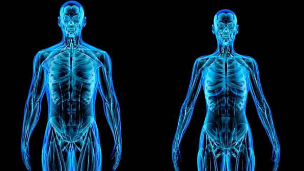 human body.png